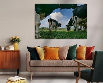 Vaches au pâturage sur Hans Heemsbergen
