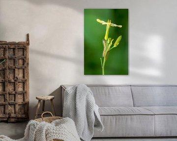 Nahaufnahme einer Raupe auf einer Pflanze von Moetwil en van Dijk - Fotografie