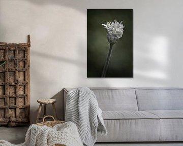 Schnittlauchblume von Ronenvief