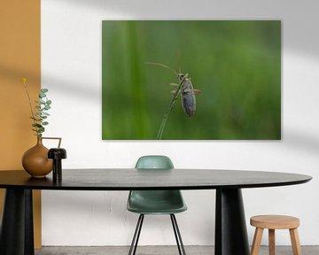 Makrofoto eines Käfers im Gras von Daphne van der straaten