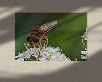 Makro einer Biene von Daphne van der straaten