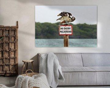 Fischadler nimmt an einem geeigneten Ort Platz ein von Silvia Weenink