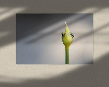 Nymphen auf Daslook von Annika Westgeest Photography