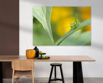 Springender Hahn im Licht von Annika Westgeest Photography