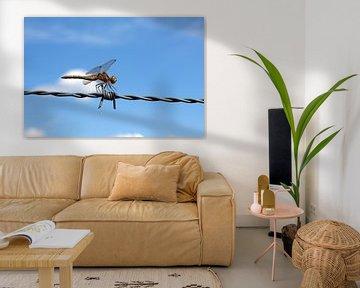Libelle op prikkeldraad van Maarten Pietersma