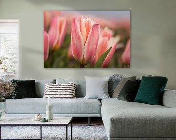 Tulpen in avondlicht van Mieneke Andeweg-van Rijn