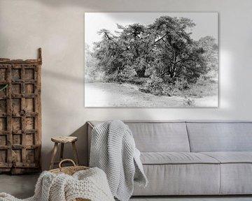 Rustiek - Grafische foto van een dennenbos