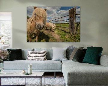 Ponys auf der Wiese bei der Windmühle von Moetwil en van Dijk - Fotografie