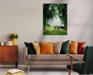 Koeien van Wouter Bos