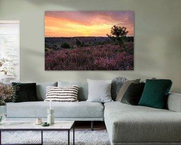 Heidelandschaft auf der Posbank von FotoBob