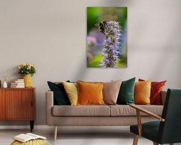 Hummel auf Blume von Lukas Coenraats