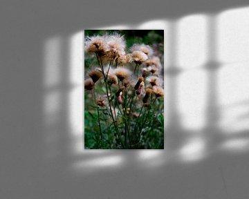 Wildblumen in Farbe von Summer van Beek