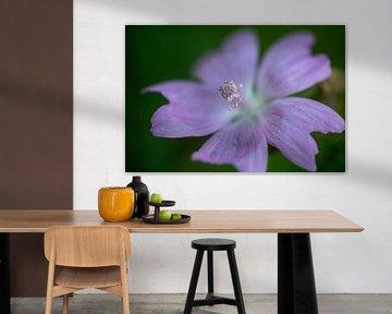 Violette Blume von MSP Canvas