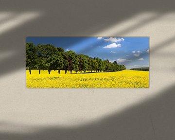 Baumallee und Rapsfeld im Frühling von Markus Lange