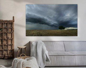 Front de tempête sur Ronny Rohloff