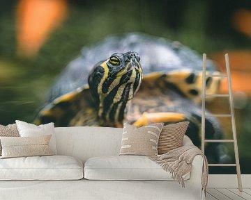 Schildpad portret geelbuikschildpad van Rick Wiersma