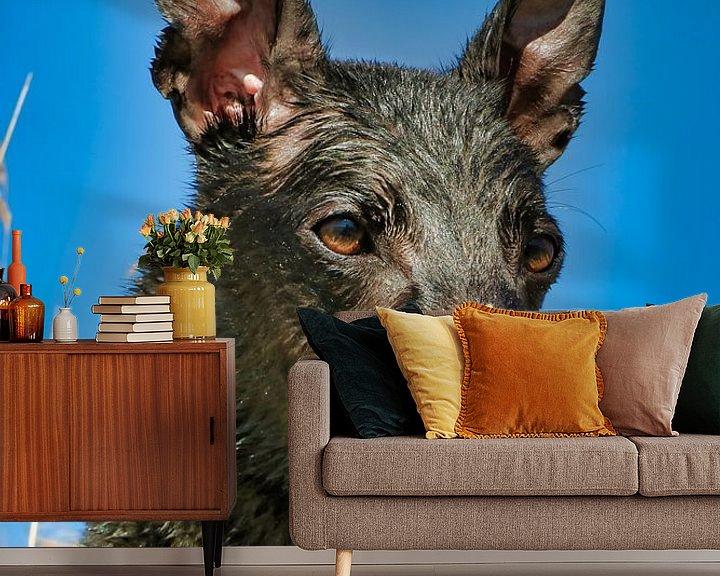 Sfeerimpressie behang: Natte Greyhound van Patrick vdf. van der Heijden