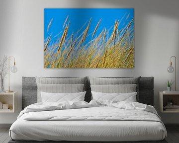 Gräser im Wind von Kirsten Warner