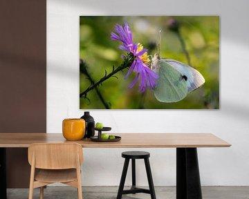 Witte vlinder op paarse bloem van Annika Westgeest Photography