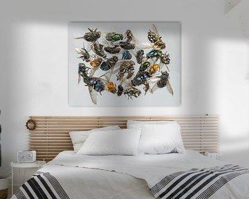 Veel verschillende dode insecten liggen op een hoop... van Hans-Jürgen Janda