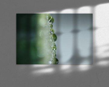Druppels op een courgette van Bärbel Severens