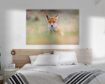 portrait du renard roux