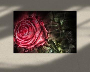 Kirlian-veldfoto van een roos in close-up van MPfoto71