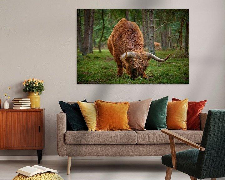 Beispiel: Weidender schottischer Highlander-Bulle von Jenco van Zalk