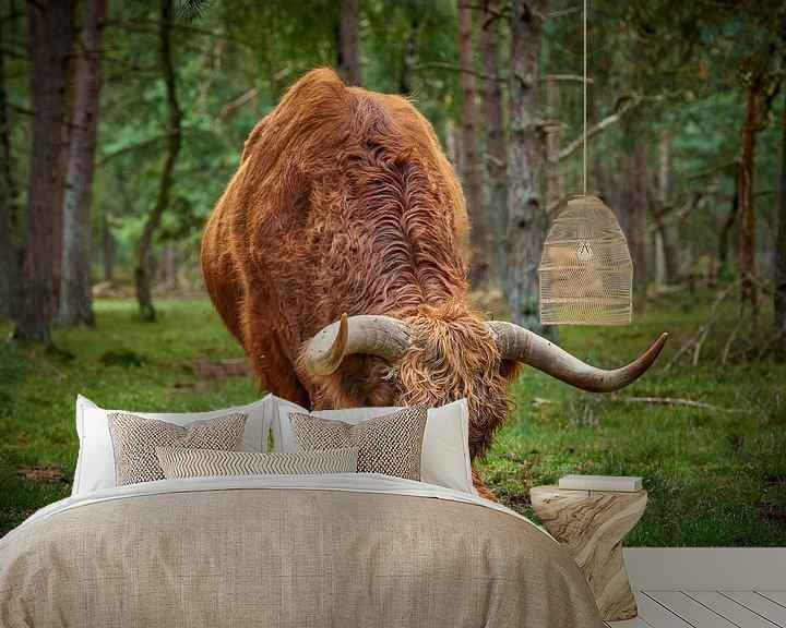 Sfeerimpressie behang: Grazende Schotse Hooglander stier van Jenco van Zalk