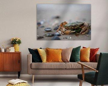 Un crabe de la mer du Nord sur Thomas Winters