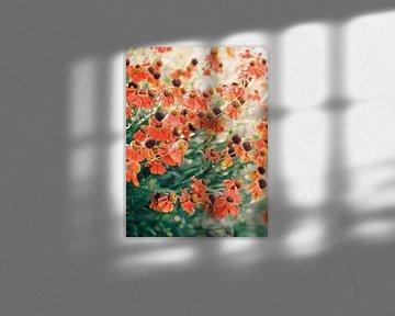 Feld mit Blumen von Hanke Arkenbout