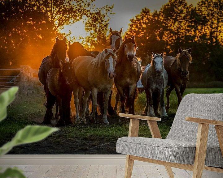 Sfeerimpressie behang: Waiting in the sunset van Natasja Claessens