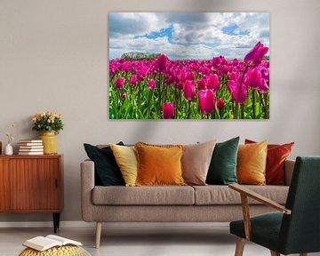 Paarse tulpen van Ivo de Rooij