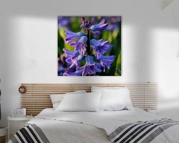 Hyacint von Rick van Zelst