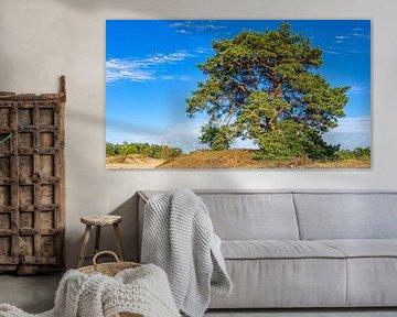 Mooie boom in Loonse en Drunense Duinen (Noord-Brabant) van Jessica Lokker