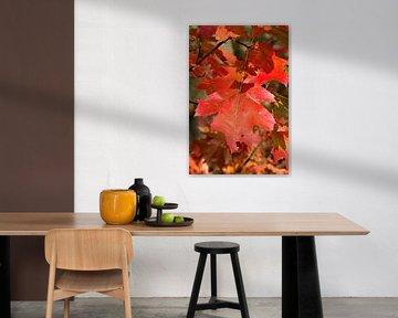 rotes Herbstblatt von W J Kok