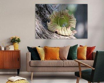 Blumen im Kürbisbaum. von Silvia Weenink