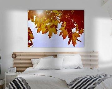 Feuilles d'automne à contre-jour