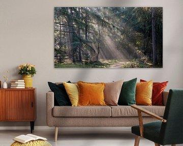 Zonneharp in het dennenbos van Manja van der Heijden