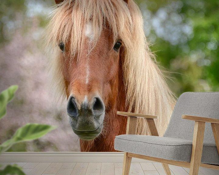 Beispiel fototapete: Pferdeportrait Aegidienberger Kreuzung zwischen Paso und Islandpferd von Katho Menden