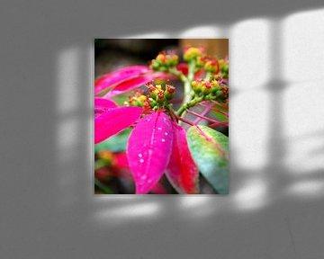 Rose blättern von Homemade Photos