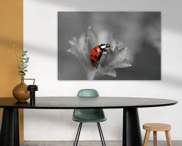 Zwartwit en rood, Lieveheersbeestje Macrofotografie von Watze D. de Haan