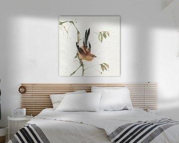 Berg Bush Warbler, Chris Paschke von Wild Apple
