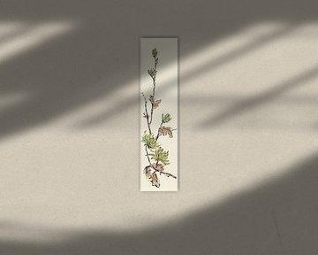Autumn II - Mint Chrysanthemum, Chris Paschke von Wild Apple