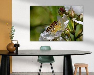 Wespe auf einer weißen Blume von W J Kok