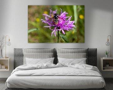 Wespe auf einer violetten Blume von W J Kok