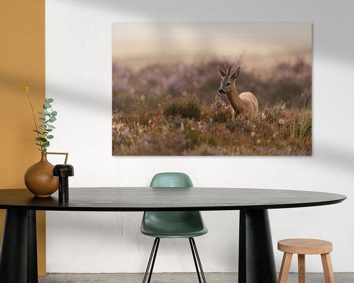 Beispiel: Reh, Rehbock ( Capreolus capreolus ), in blühender Heide, typischer, leicht nebeliger Spätsommermorg von wunderbare Erde