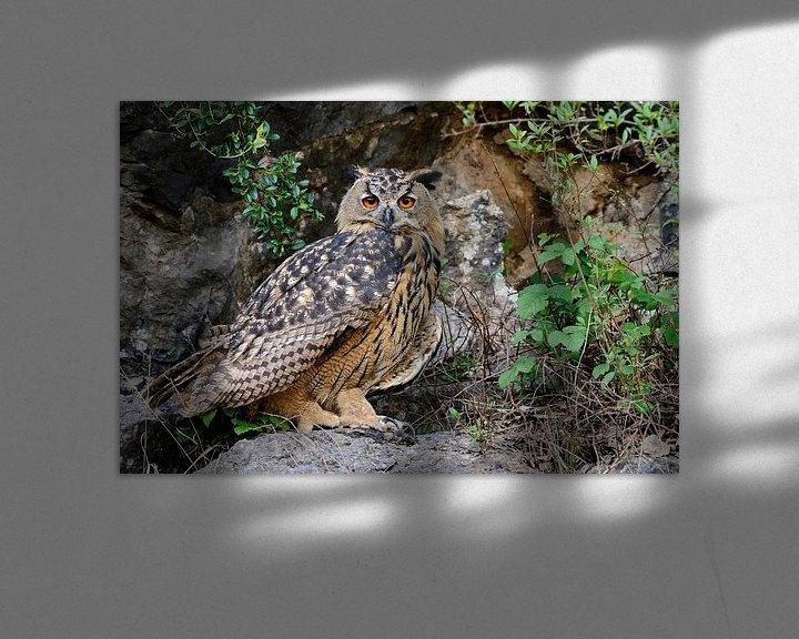 Beispiel: Uhu ( Bubo bubo ), Jungvogel in einem aufgelassenen Steinbruch, präsentiert sich von seiner besten S von wunderbare Erde