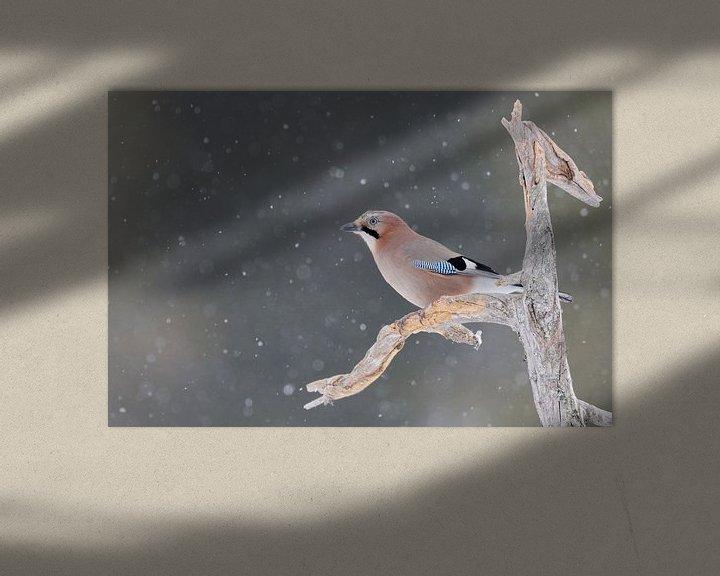 Beispiel: Eichelhäher ( Garrulus glandarius ) im Winter bei Schnefall auf dem Ausguck, wildlife, Europa. von wunderbare Erde