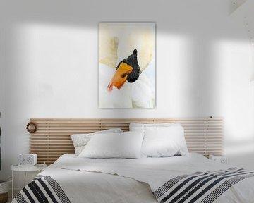 Zwaan in onderhoud - kleur von Ernst van Voorst